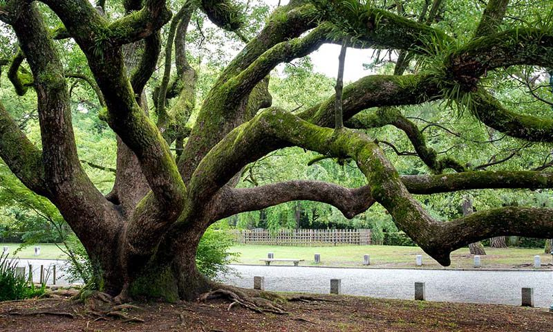 paolo giorgio bassi - alberi monumentali testimoni giudici processo urbanizzazione